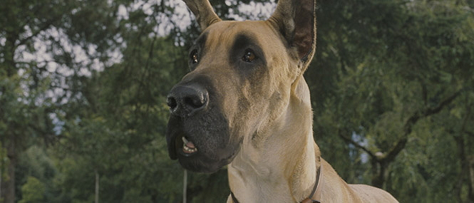 marmaduke dog breed