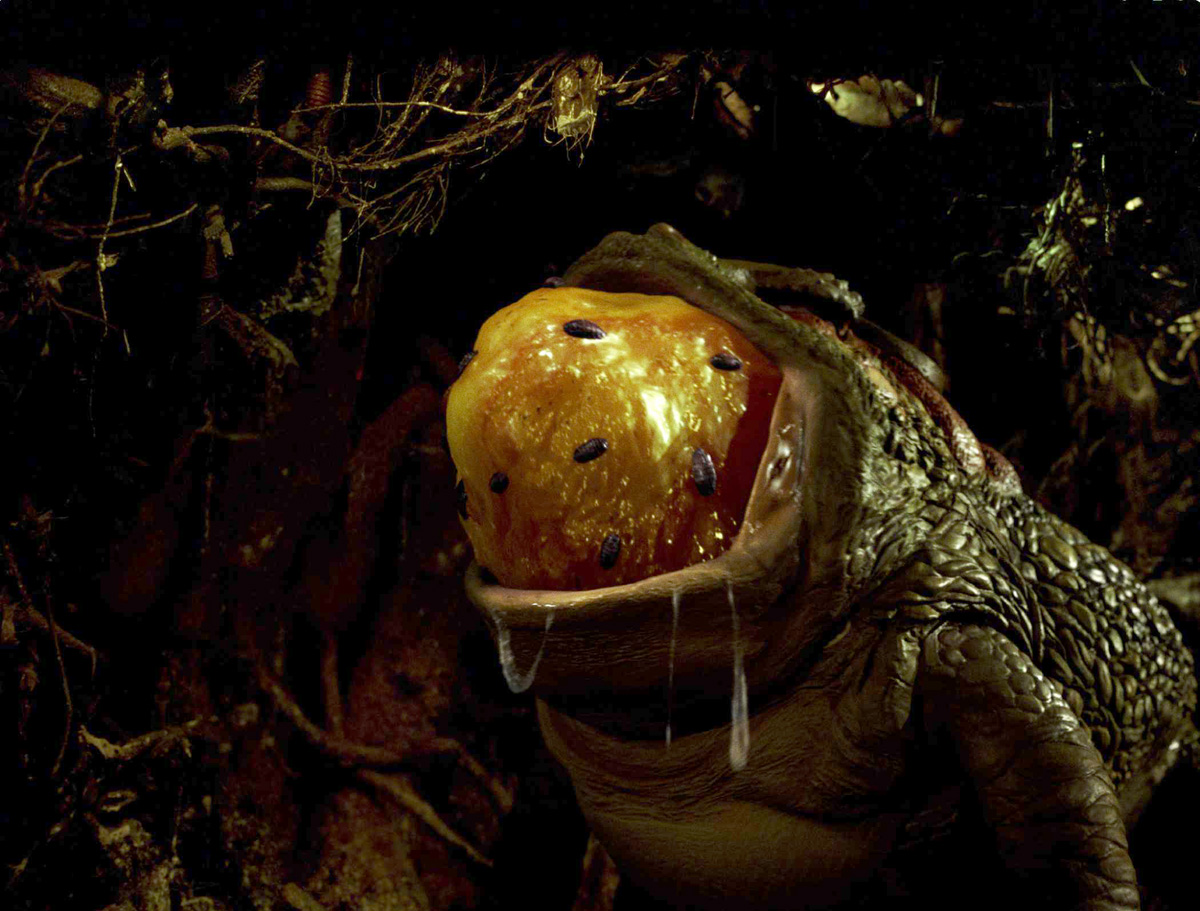 07Jan/labyrinth/frog