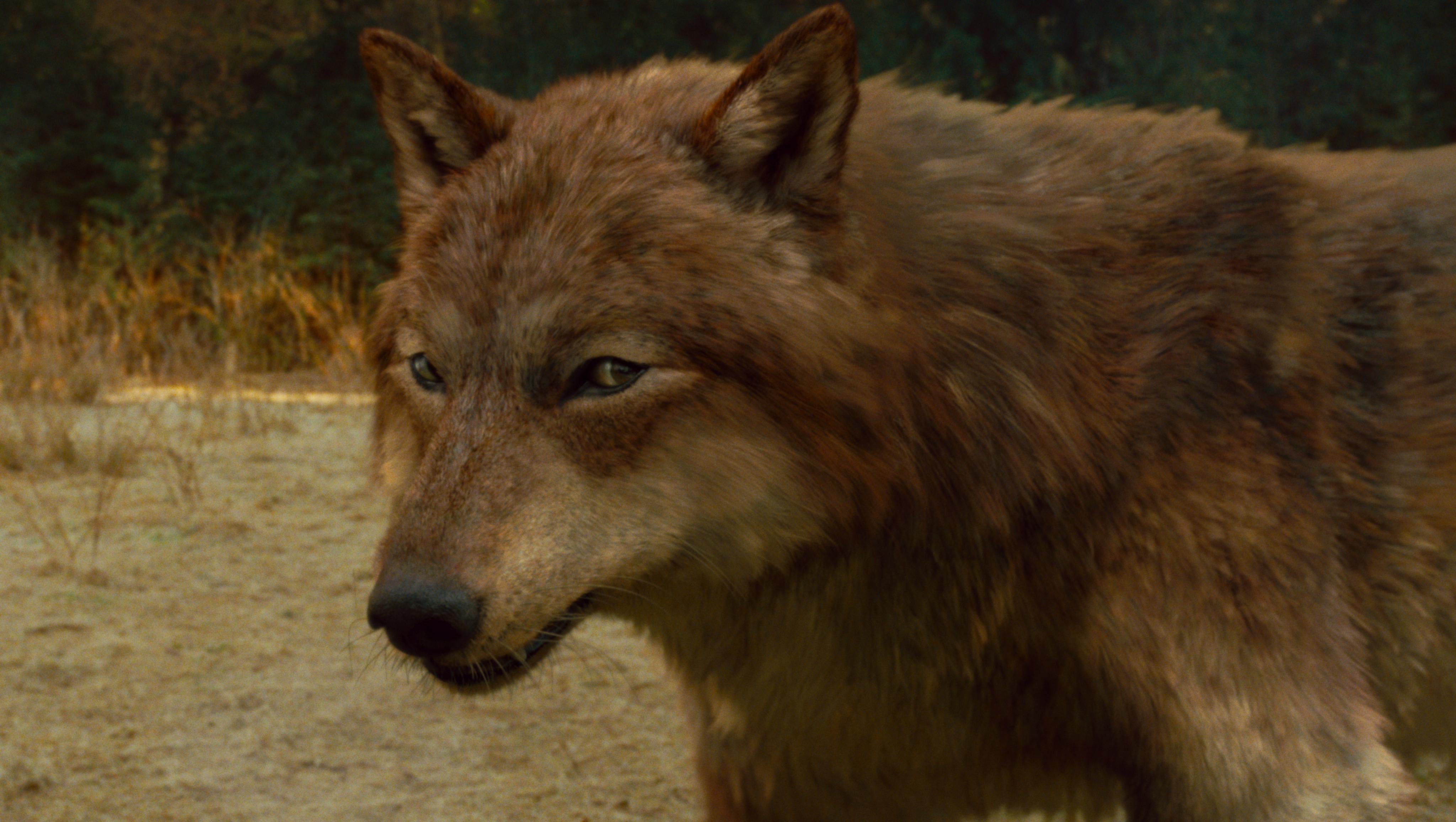 up about wolf behaviou...