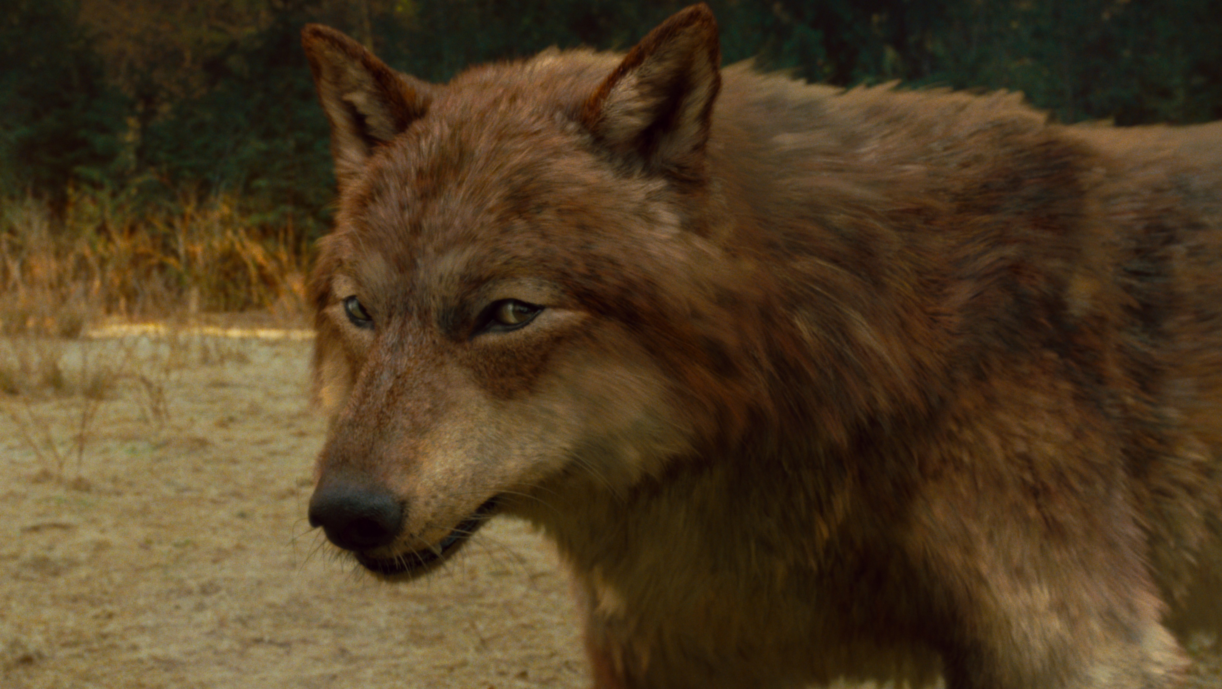 wolf run black dating site Muzzle loading & black powder guns kits, parts, accoutrements, rendezvous gear & primitive americana.
