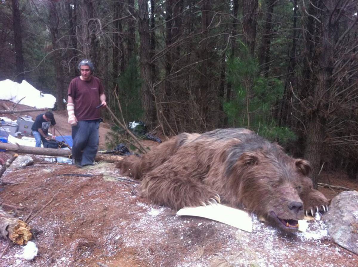 L'orso sul posto.