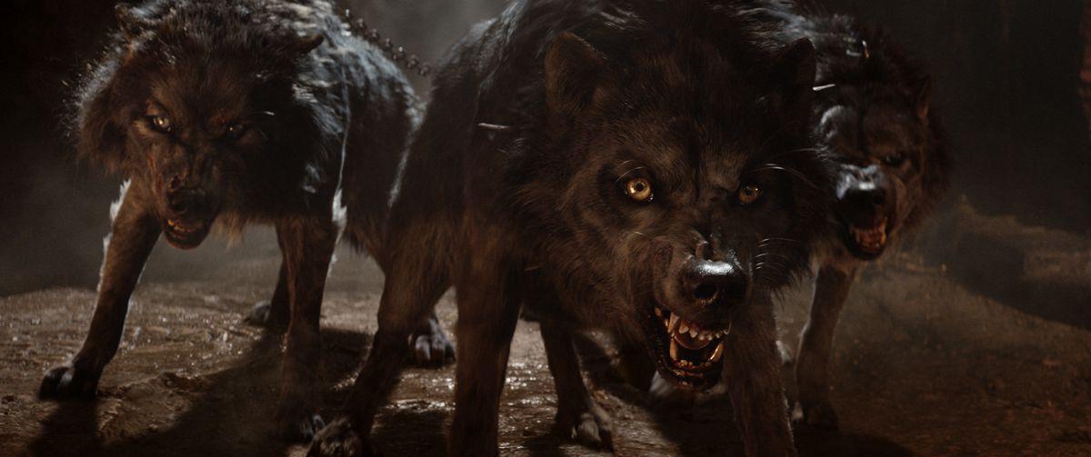 Hercules 2018 wolves