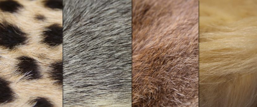 Fur reference.